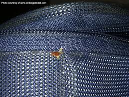 How To Kill Bed Bugs At Home How Do I Get Rid Of Bed Bugs Do I Have Bed Bugs How To