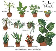 decorative indoor plants set different indoor plants eith decorative stock vector hd royalty