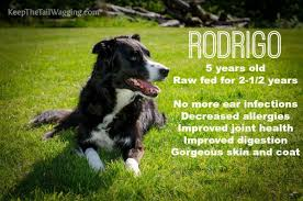 making time to feed a raw food diet to your dog keep the tail