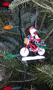 tree alternatives stray cat bicycles