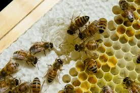 How To Get Rid Of A Beehive In Your Backyard Everything You Need To Know About Keeping Bees And Producing Your