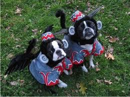Flying Monkey Halloween Costume Boston Terriers Dressed Winged Monkeys Dogs