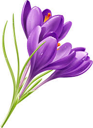 purple flowers abstract beautiful flower vector background cover template