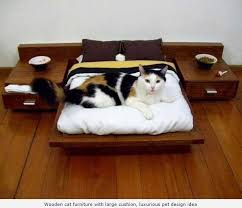 creative cat beds for sweet dreams