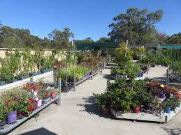 native plant nursery perth garden nursery baldivis baldivis landscaping supplies