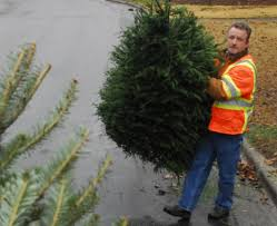 green christmas tree farms seeing the best of times despite rain