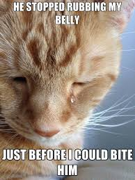 Sad Cat Memes - 10 hilariously heartbreaking first world cat problems that we