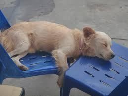 Tired Dog Meme - funny dog so tired picture funny dog graphics99 com