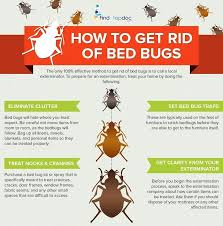 natural bed bug remedies how to get rid of bed bugs receive4 club