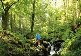 Bad Liebenzell Eishalle Urlaub Im Schwarzwald Schwarzwald Tourismus Gmbh