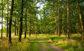 photography nature landscape trees forest path summer