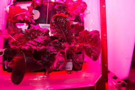 Most Difficult Plants To Grow Crew Members Sample Leafy Greens Grown On Space Station Nasa