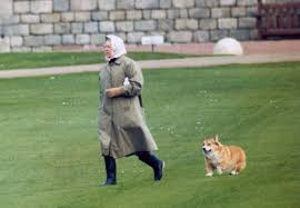 queen s dogs the queen has adopted a new corgi called whisper metro news