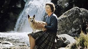 queen elizabeth dog queen elizabeth ii down to her last corgi after beloved holly dies