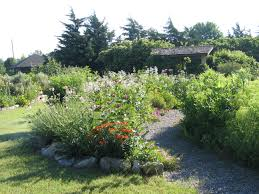 native plants landscaping native plants are becoming
