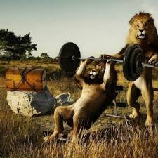 Monkey Bench Upper Body Power New Prs Again Shred For Less