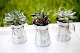 eco friendly wedding favors diy eco friendly succulent wedding favors trendy magazine