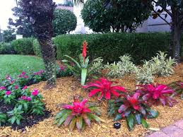 tropical garden ideas best tropical landscape design ideas u2014 home landscapings