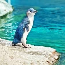penguin cove 2016 louisville zoo
