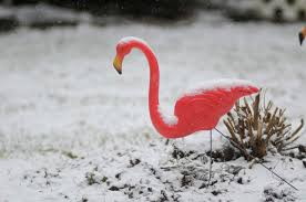 massachusetts creator of iconic pink lawn flamingo dies at 79