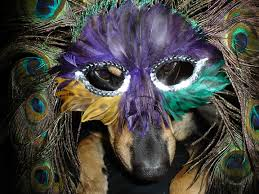 mardi gras material 17 dogs who are ready for mardi gras