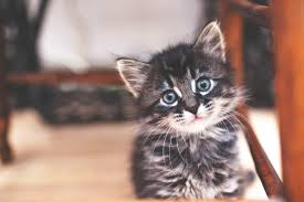 why a kitten u0027s first year is the most important
