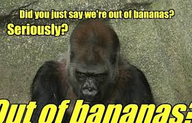 Funny Gorilla Memes - that s just bananas animal capshunz funny animals animal captions