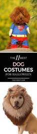 225 best dog costumes images on pinterest pet costumes animals