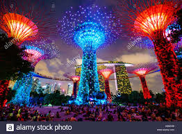 supertree grove in the gardens by the bay a futuristic botanical
