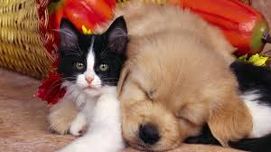 desktop picture cute baby funny dogs pictures litle pups