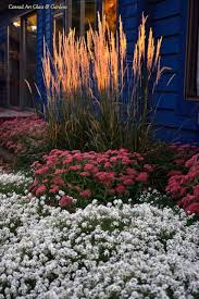 140 best grass images on landscaping ornamental