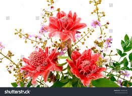 flower arrangements pink torch ginger flowers stock photo