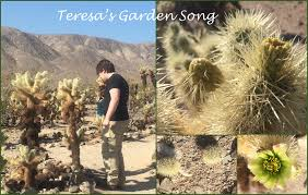 49 best california native plants teresa u0027s garden song wildflowers and native plants southern