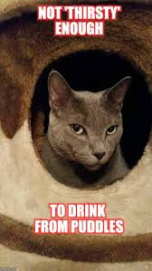 Sarcastic Cat Meme - sarcastic cat memes imgflip