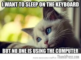 Cat Meme Images - sad cat is sad 25 hilarious first world problems cat meme