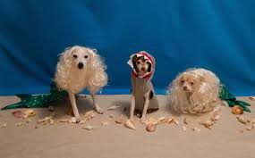 decorated canine trio goes with u0027under the sea u0027 theme for