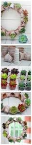 156 best succulents images on pinterest plants succulent