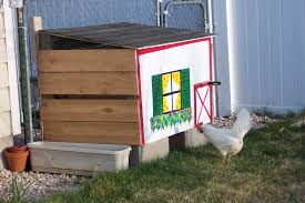 Can I Have Chickens In My Backyard by Can I Have Chickens In Greeley Colorado Life Transplanet