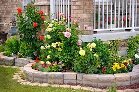9 low maintenance plants u0026 flowers blain u0027s farm u0026 fleet blog