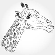 giraffe isolated black contour on white background sketch hand
