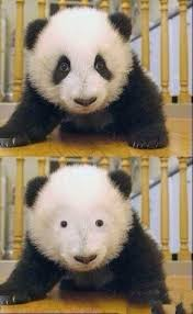 Eyeliner Meme - meme how i feel without eyeliner i m sure a lot of you can relate