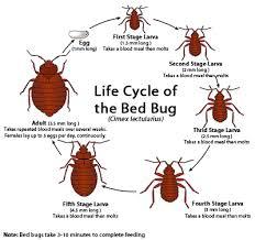 Severe Bed Bug Bites Bed Bug Bites Signs Symptoms And Treatment