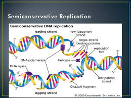 chapter 12 notes dna rna and protein synthesis ppt download
