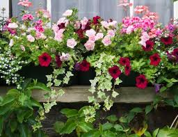 7 best plants for fall container gardens