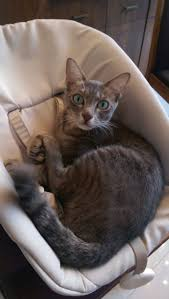 139 best missing cats in singapore images on pinterest singapore