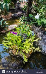 botanical gardens on nevis island st kitts and nevis leeward