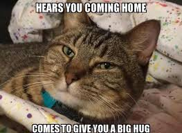 Good Cat Meme - nadia on twitter here s my cat meme tell me what you think