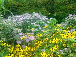 native plants minnesota nature in humanity september 2014