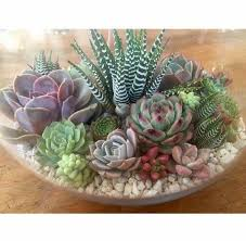 succulent arrangements ideas mamak
