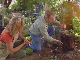 the right way to plant a tree diy